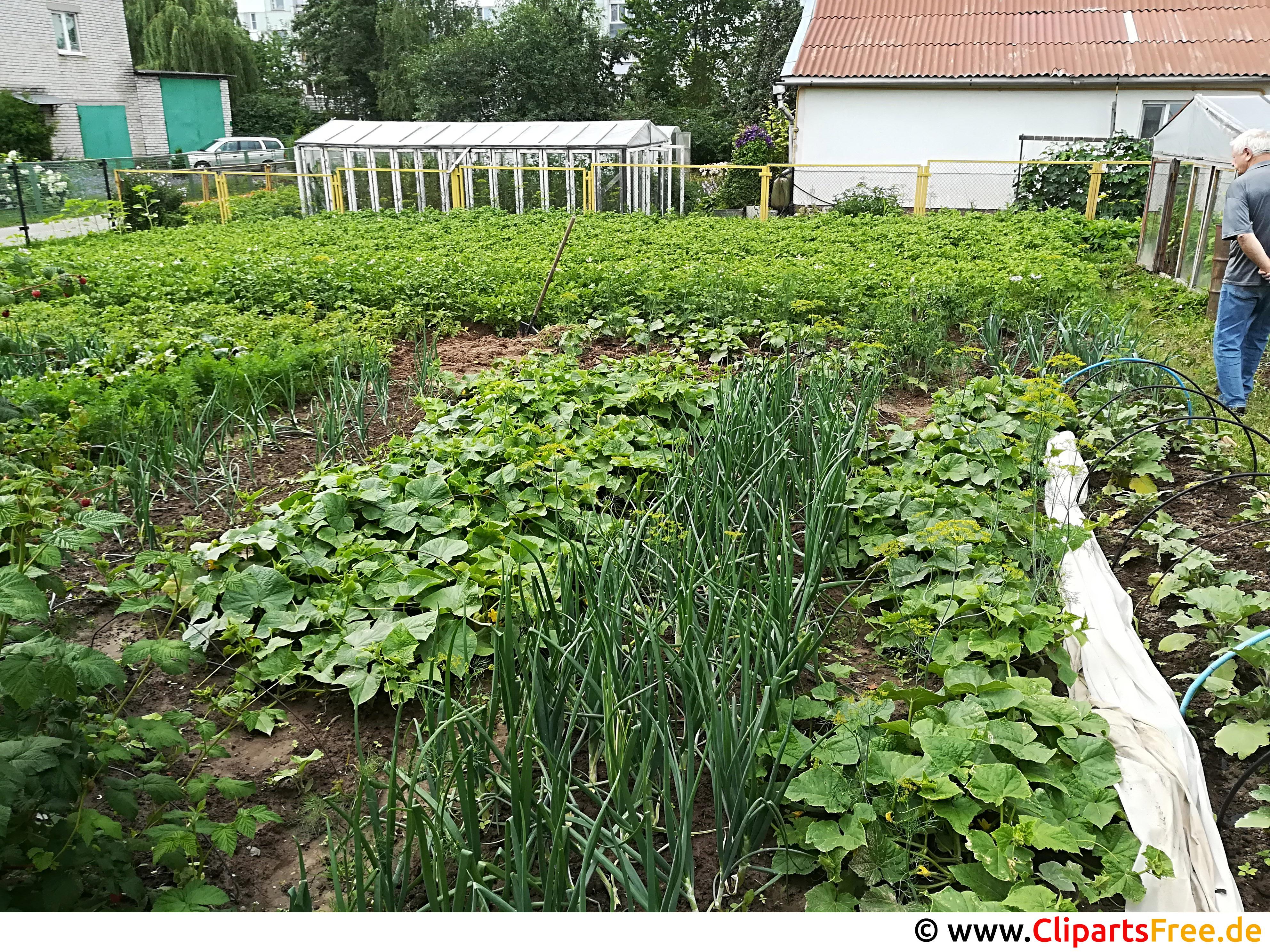 Kleingarten mit Gemüse neben Haus Foto