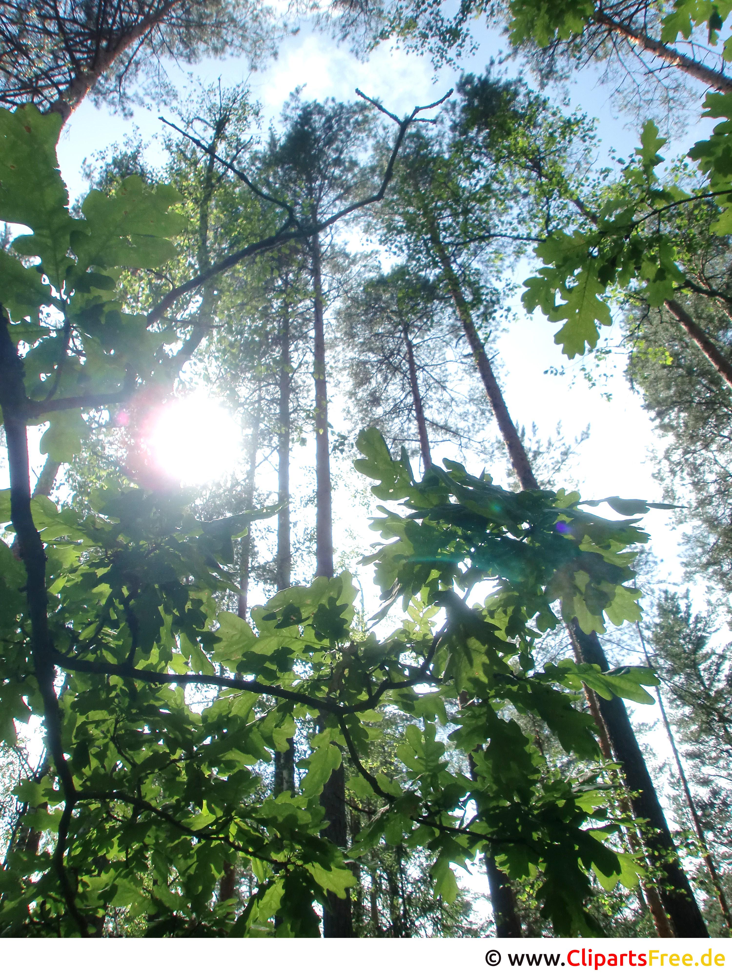 Bäume im Wald im Sommer Foto, Bild, Grafik kostenlos