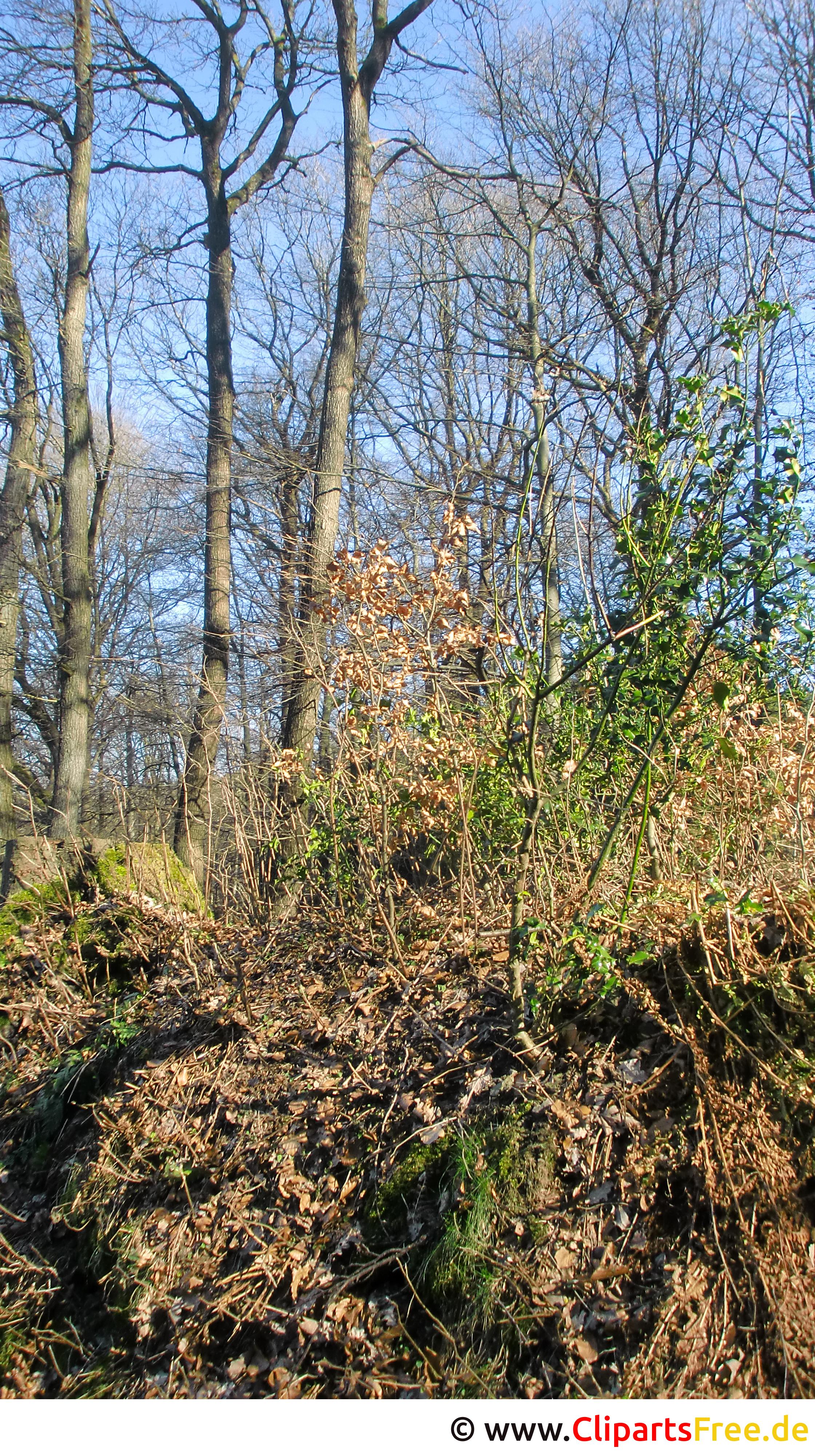 Wald im Frühling Foto kostenlos