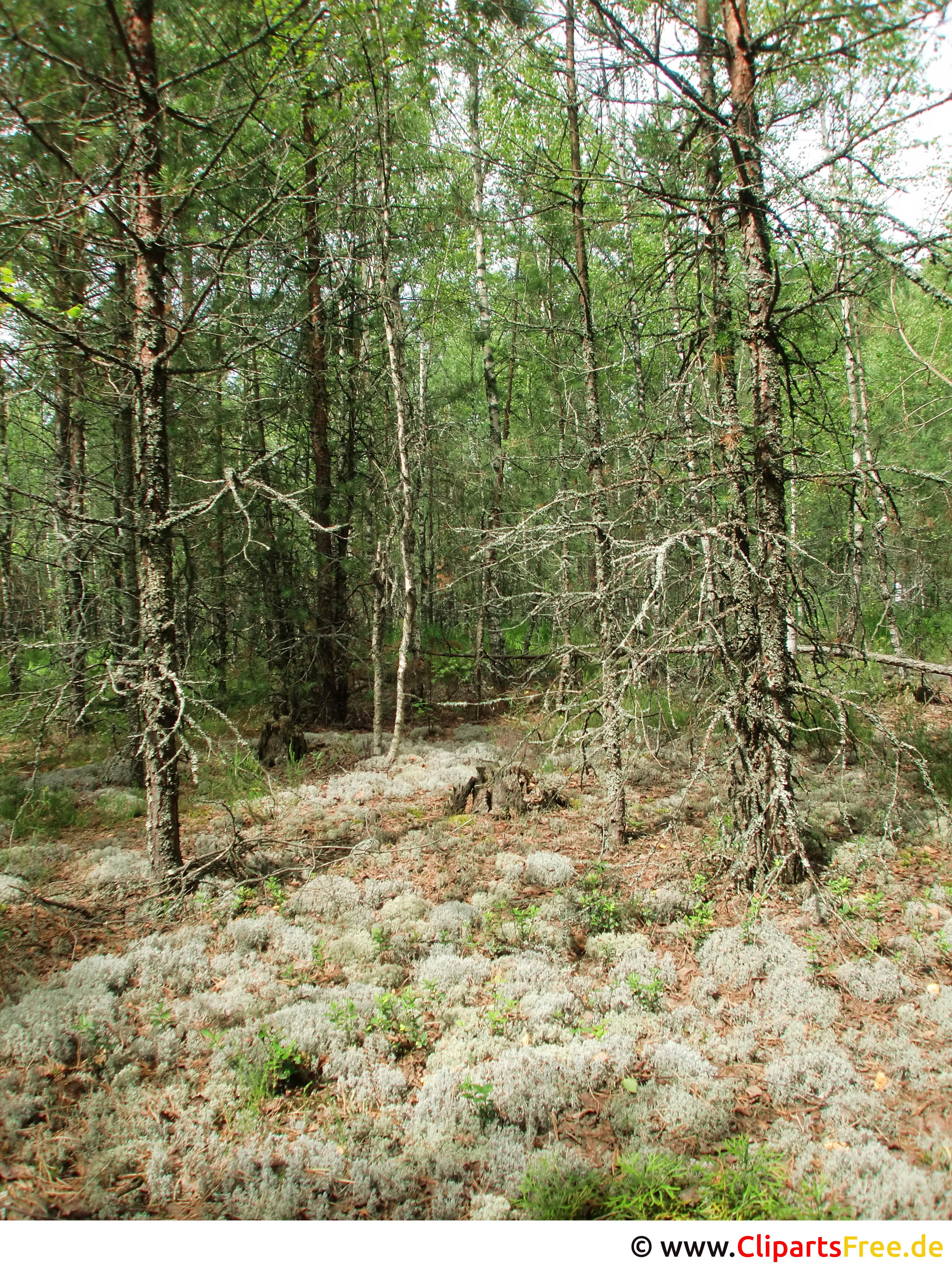 Wald im Sommer im Osteuropa Foto, Bild, Grafik kostenlos