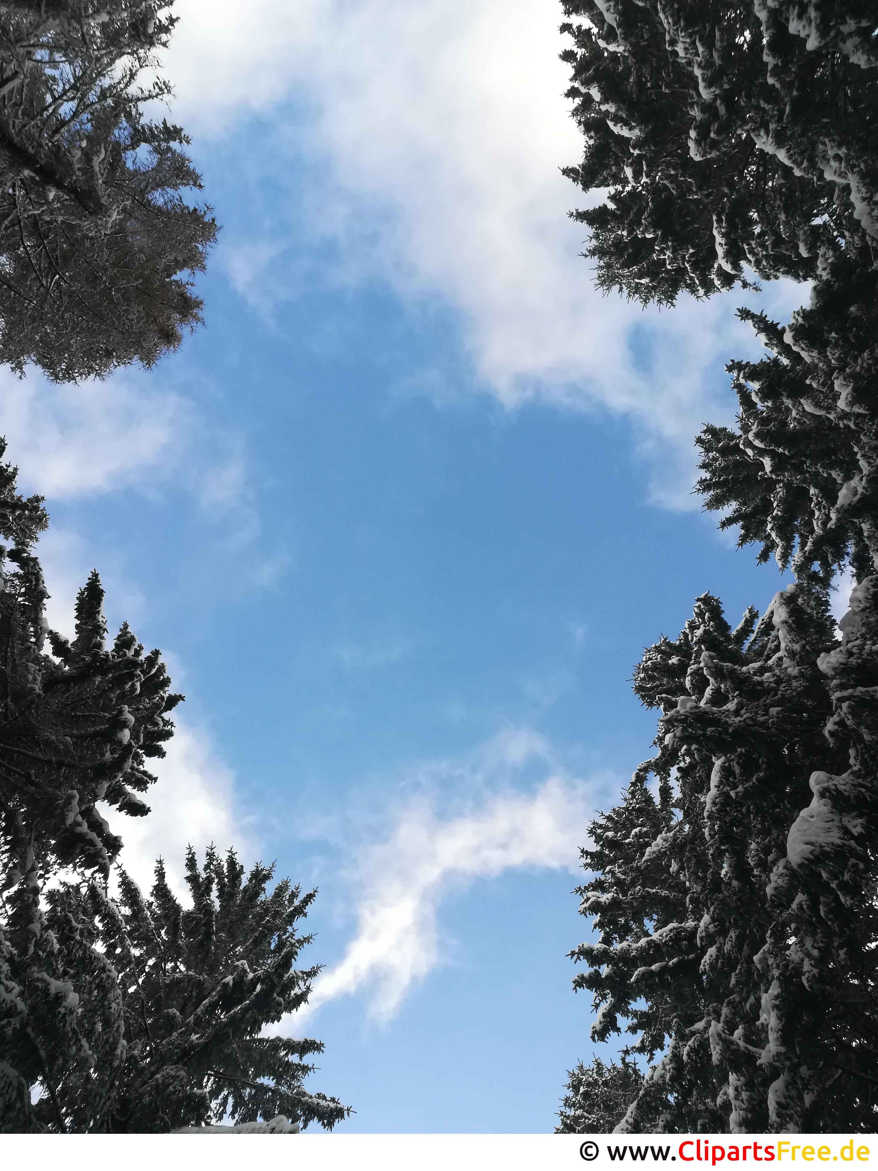 Himmel zwischen den Bäumen Bild, Foto, Grafik kostenlos