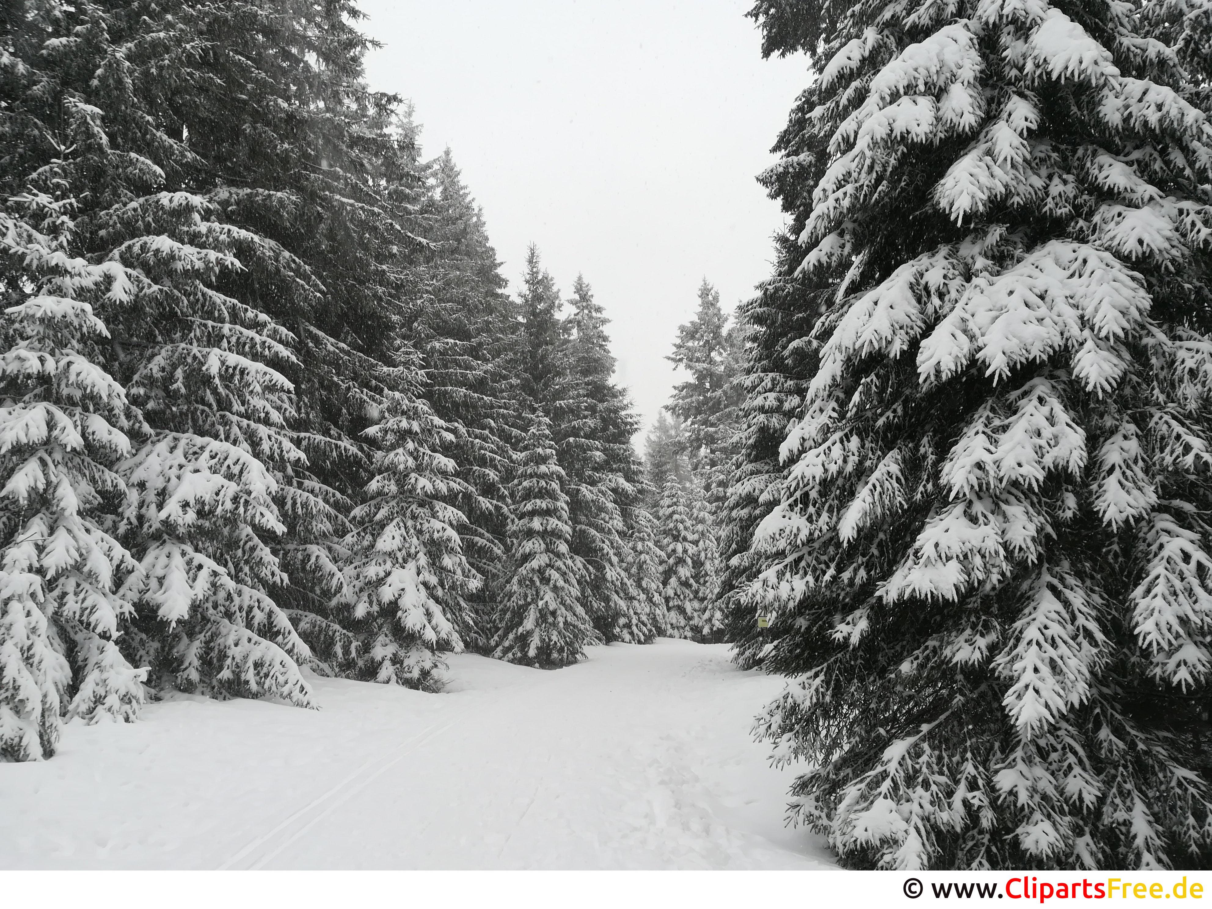 Wald im Winter Bild, Foto, Grafik kostenlos