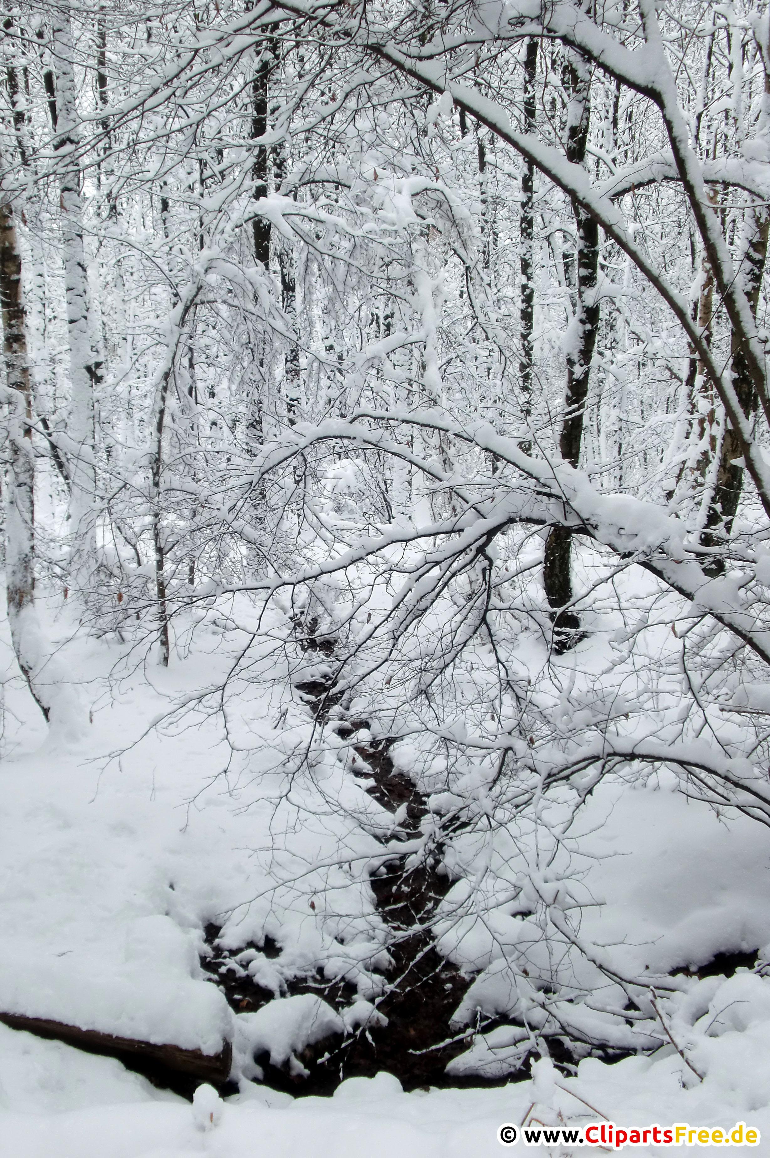 Wald im Winter Foto kostenlos