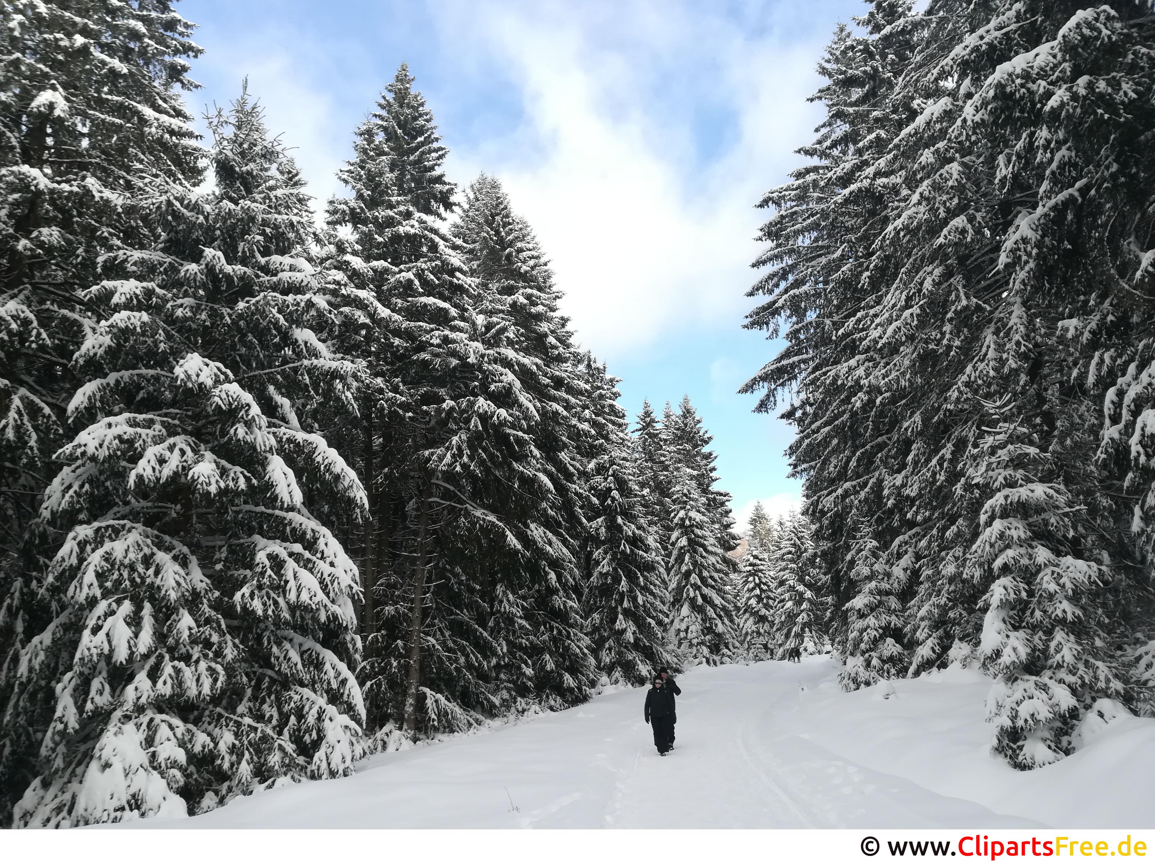 Wandern im Wald im Winter Bild, Foto, Grafik kostenlos