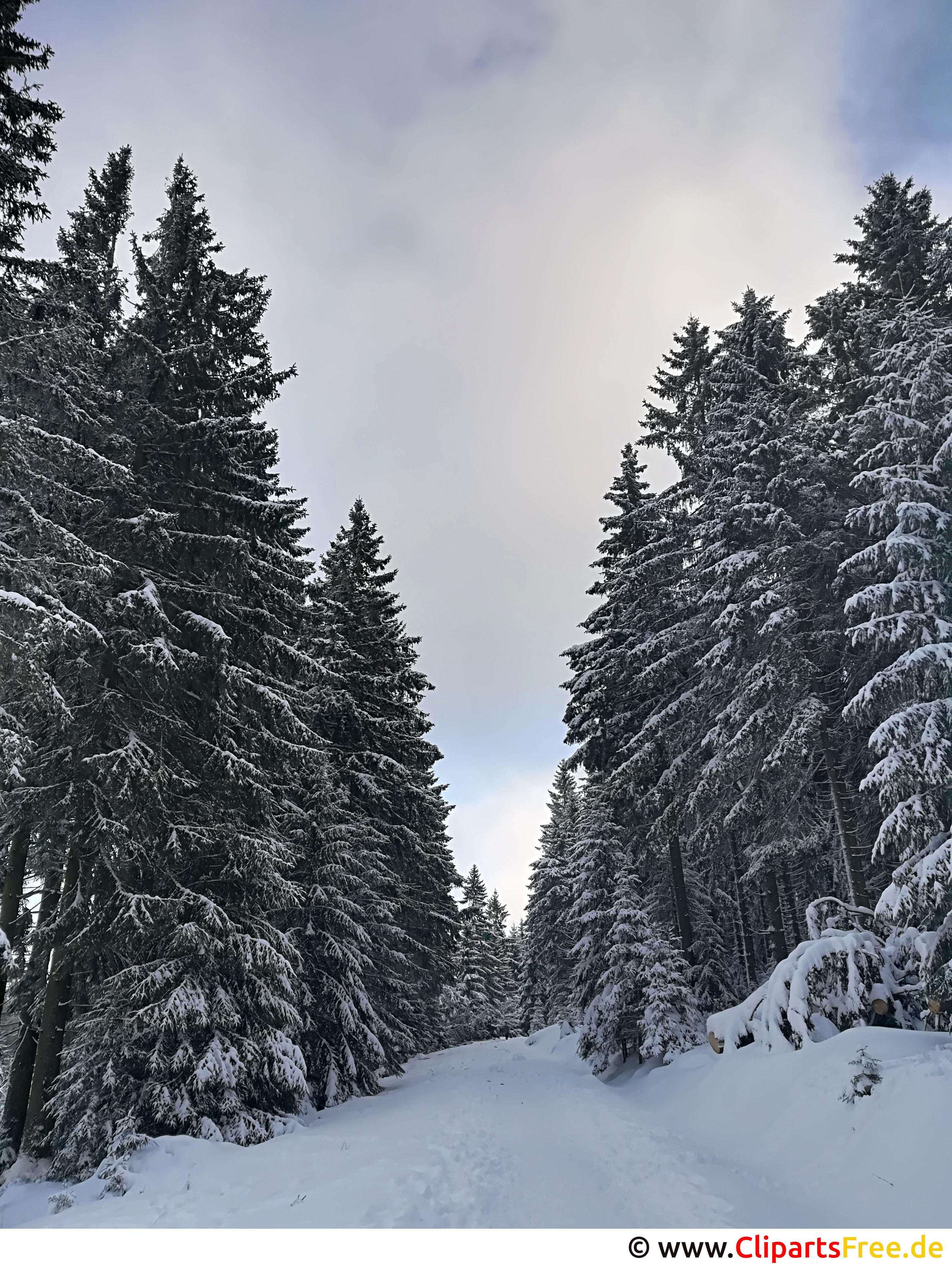 Wanderweg im Wald im Winter Bild, Foto, Grafik kostenlos