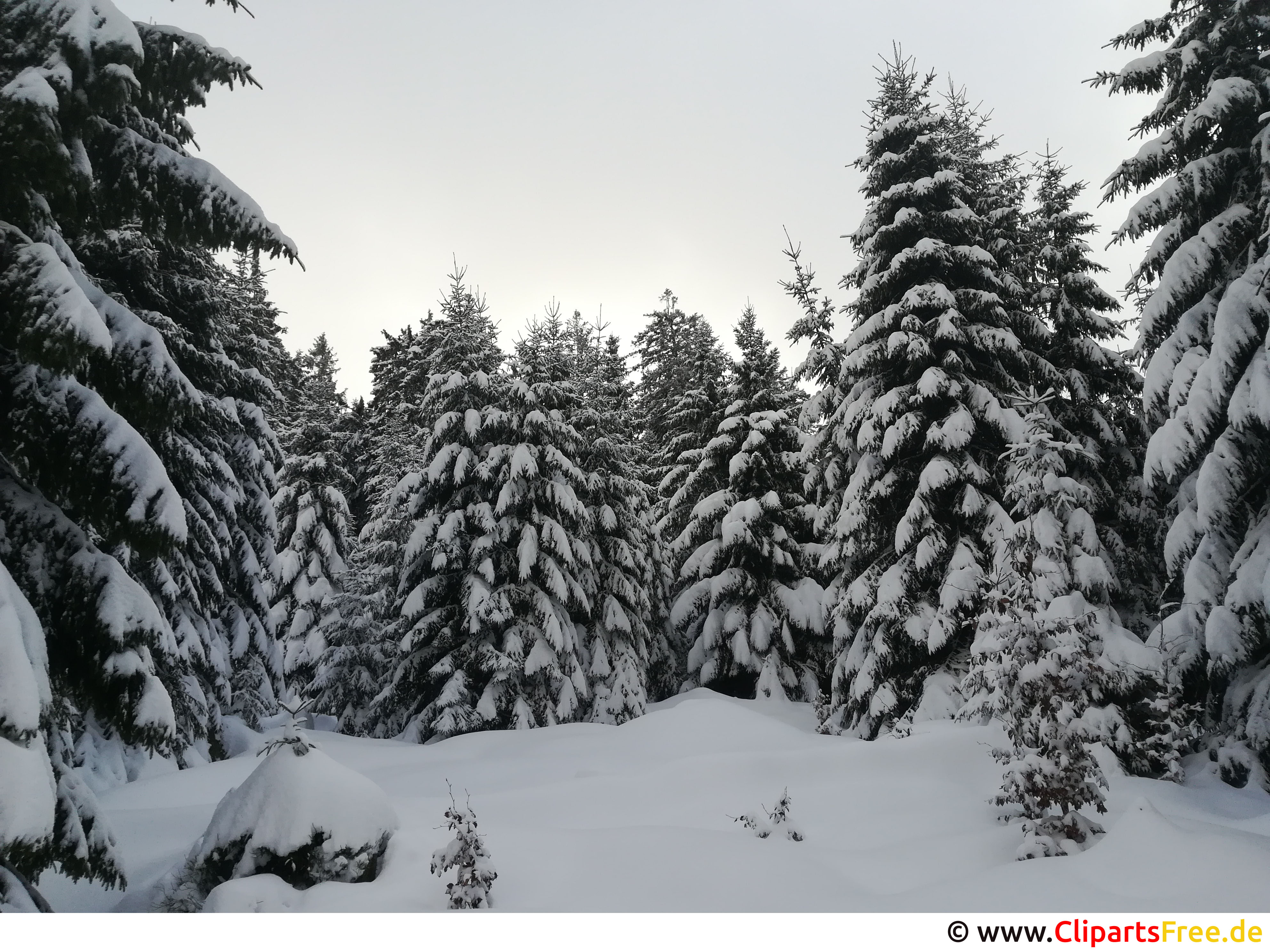 Winter im Harz Bild, Foto, Grafik kostenlos