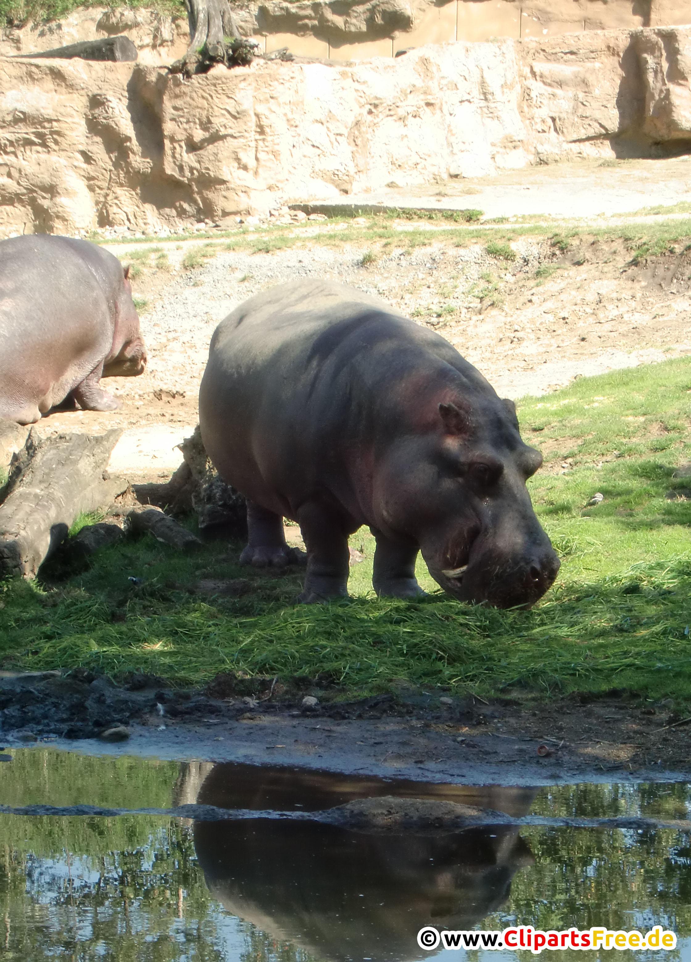 Hippo Fotobank kostenlos