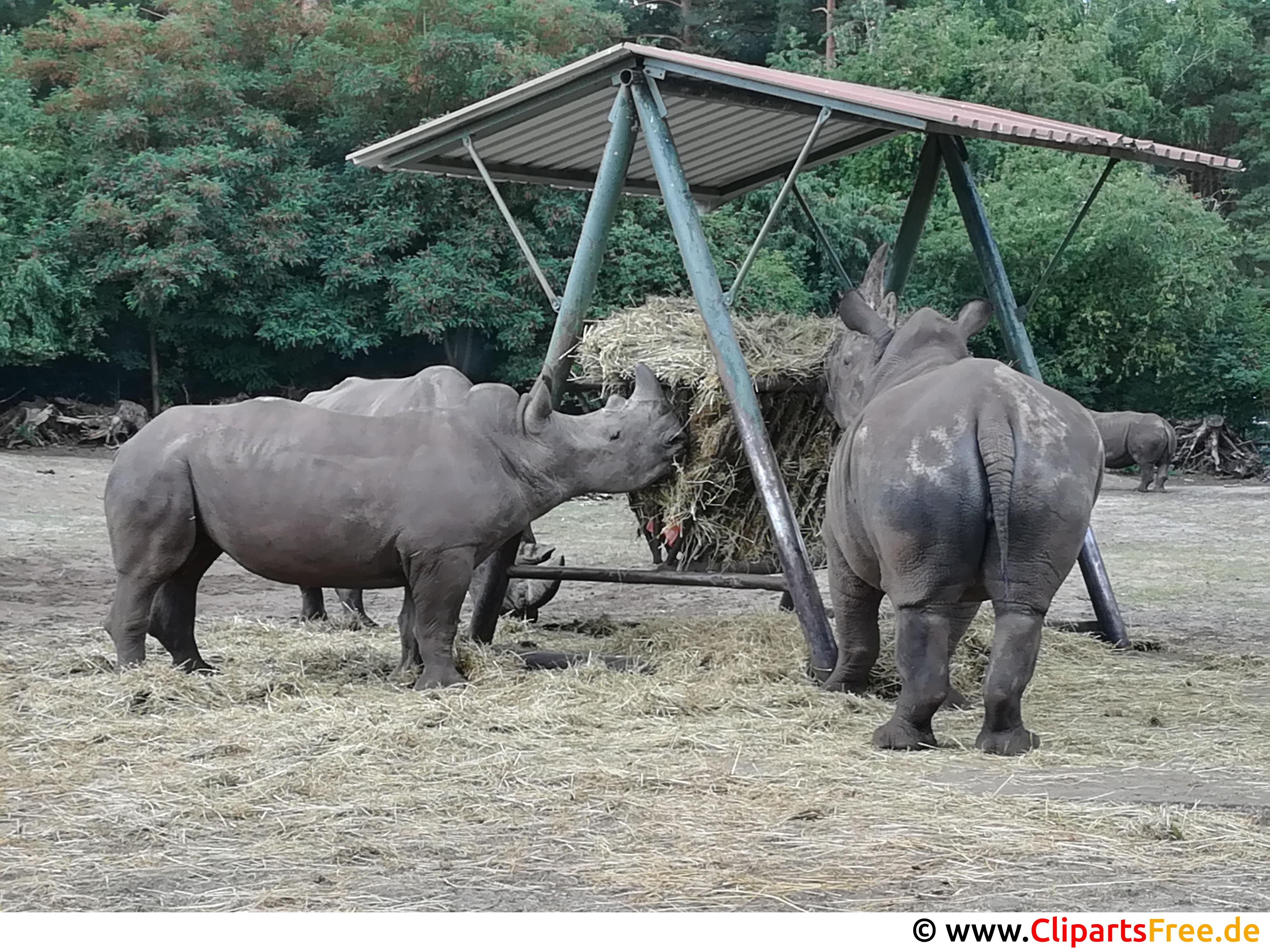 Nashörne im Zoo Foto