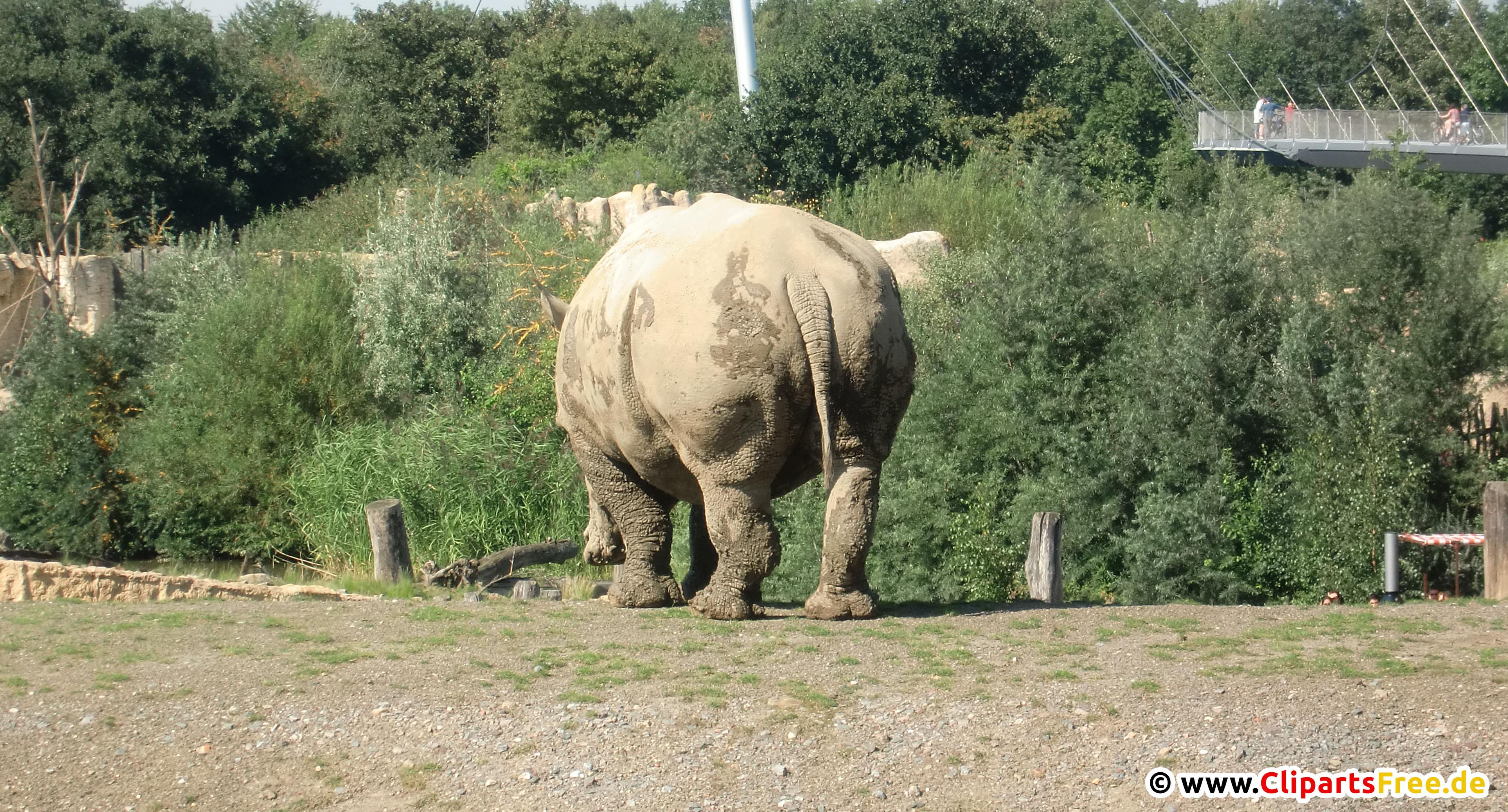 Nashörner im Zoo Foto kostenlos
