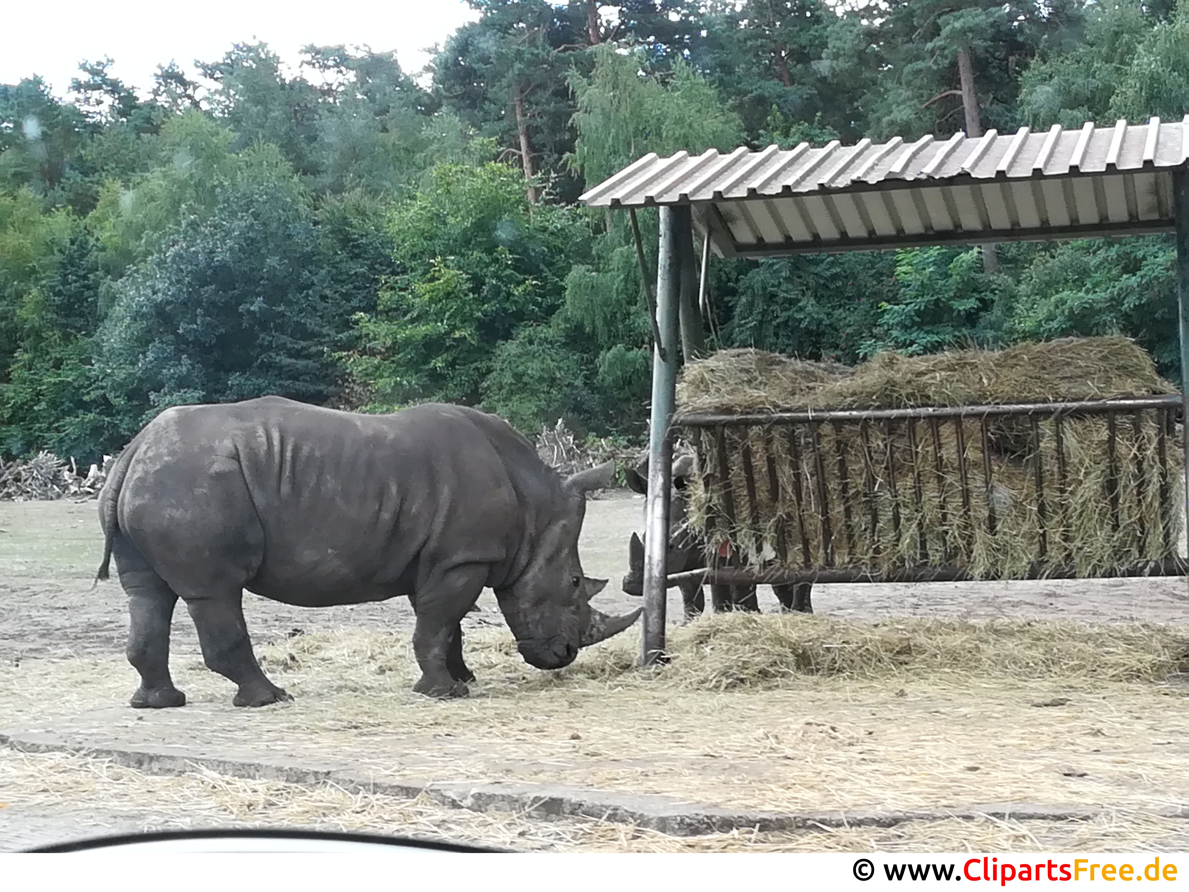 Nashorn Bild kostenlos