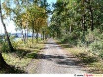 Drumul în pădure fotografie