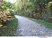 Path from paving stones free photo, picture