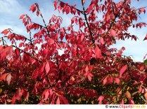 Strom s červenými listy - fotografie na téma podzim
