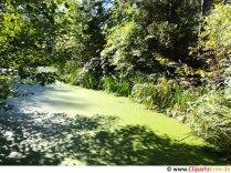 Dam med alger i skoven gratis foto