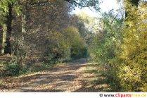 Wald im Herbst Foto, Bild, Grafik kostenlos