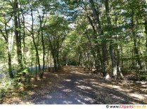 Sti i skoven på solskinsdag foto gratis