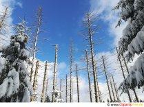 Blå himmel billede, foto, grafik gratis