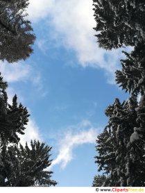 Himmel mellem træerne Billede, foto, gratis grafisk