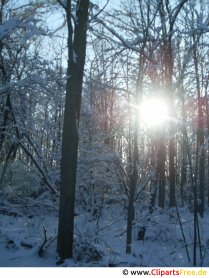 Sun between the trees Image, photo, graphic free