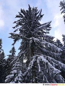 Grantræ om vinteren, snebillede, foto, grafik gratis