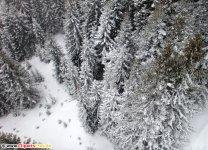 Grantræer om vinteren Foto gratis