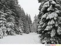 Skov om vinteren billede, foto, grafik gratis
