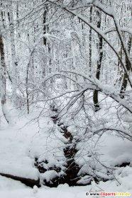 Skov om vinteren. Foto gratis