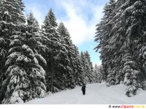 Hiking in the forest in winter Image, photo, graphic for free