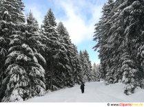 Vandring i skoven om vinteren Billede, foto, grafik gratis