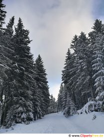 Hiking trail in the woods in winter Image, photo, graphic for free