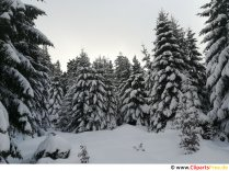 Winter in the Harz Picture, photo, graphics for free