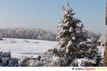 Vinterlandskab smukt foto om vinterens tema