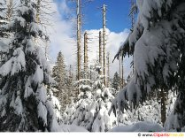 Winter forest picture, photo, graphic for free