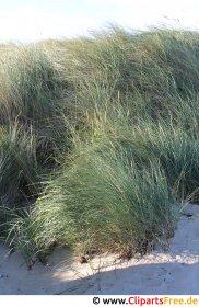 Planter på stranden ved Østersøen frit billede