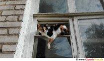 Katten sitter vid fönstret