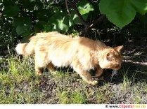 Rød kat i haven foto gratis