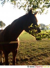 Hestehovedfoto gratis
