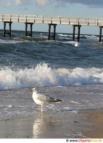Måge ved Østersøen foto gratis