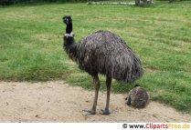 Struds i zoo-billedet