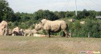 Rhinos foto gratis