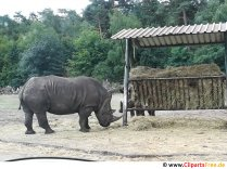 Rhinoceros picture free