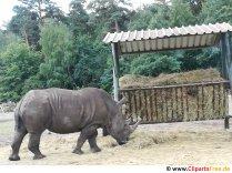 Rhinoceros Photo Free