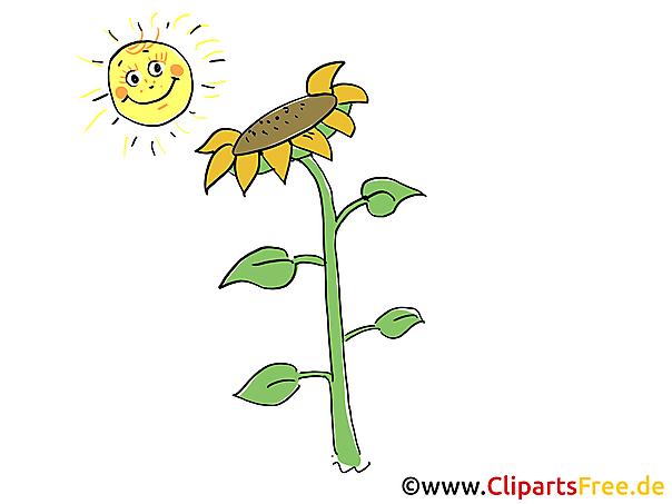 Bauernhof Bild Sonne und Sonnenblume