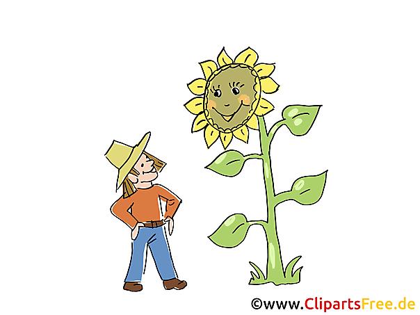 Bauernhofbilder Bauer und Sonnenblume im Garten