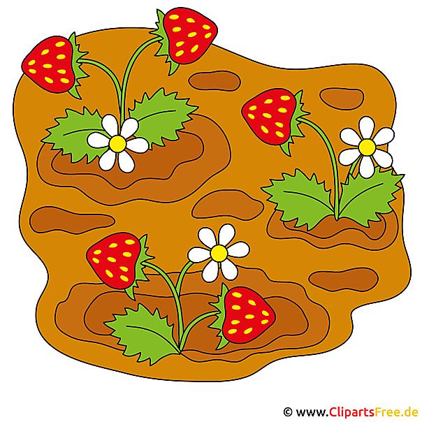 Aardbeien Cartoon Clipart Gratis
