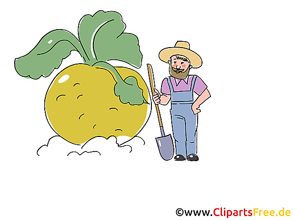 Rübe Bild, Clipart, Illustration