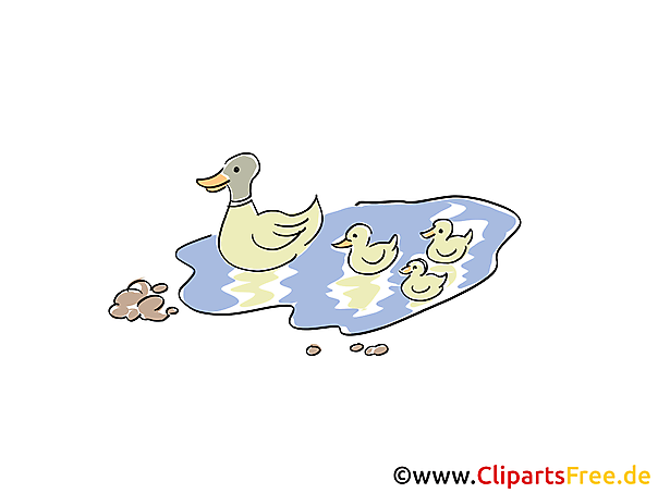 Teich mit Enten Bild, Clipart, Cartoon
