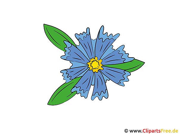 Korenbloem afbeelding illustraties