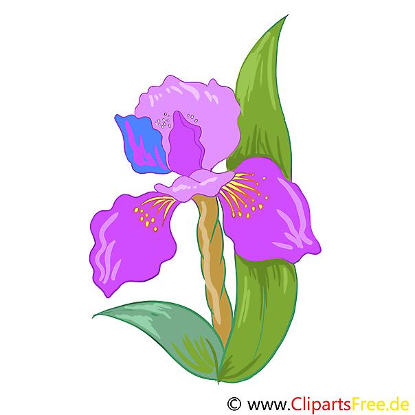Iris bloem afbeelding, illustraties, afbeelding, illustratie gratis