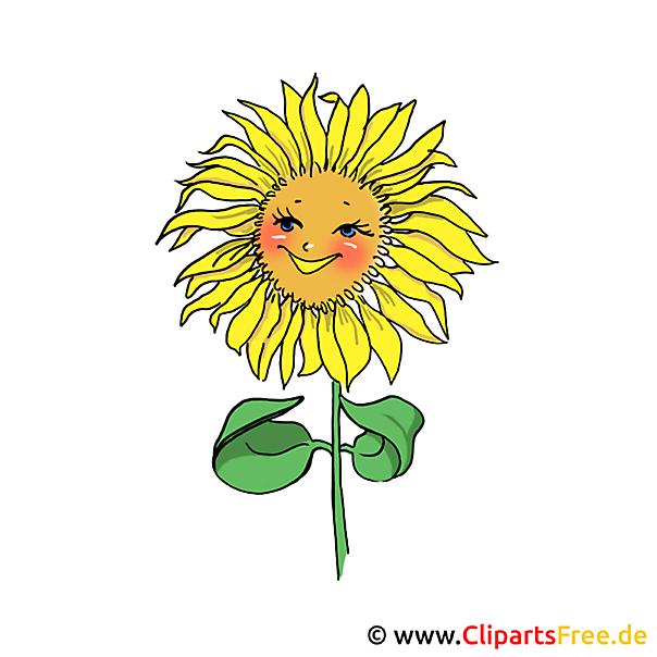 Sonnenblume Bild Clipart gratis